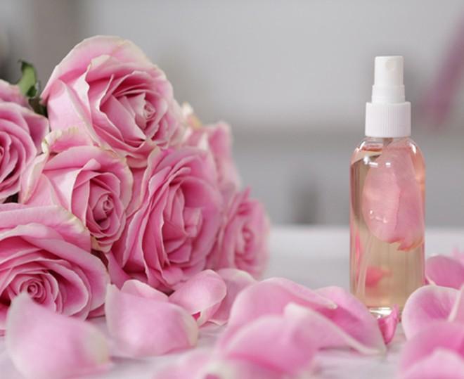 Cách làm nước hoa hồng se khít lỗ chân lông
